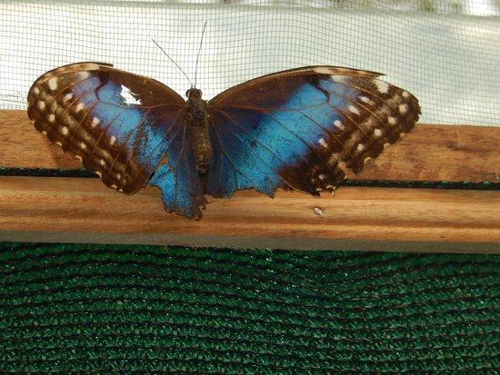 Mar Inn Bed & Breakfast: butterfly garden