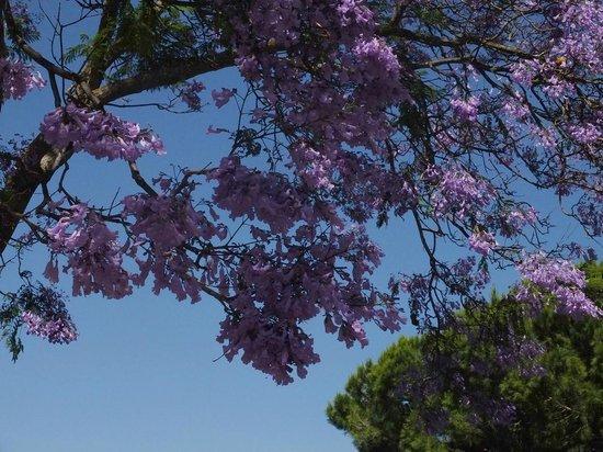 Blue & Green Vilalara Thalassa Resort : Jardins