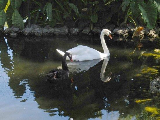 Blue & Green Vilalara Thalassa Resort : Dans les jardins , un étang !