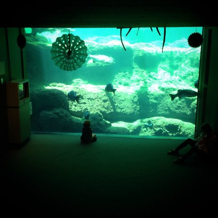Flint RiverQuarium : This area fills up quickly, so get a space to sit and watch the divers feed the fish!