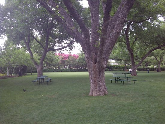 Arboreto y Jardín Botánico de Dallas: Lots of shade!