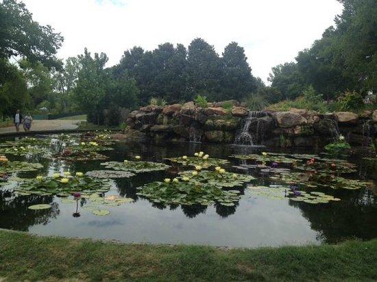 Arboreto y Jardín Botánico de Dallas: Lilly pond