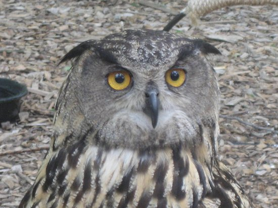 World Bird Sanctuary : owl