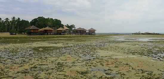 Loola Adventure Resort: When tide is low, opens up a new world for intertidal explorations!