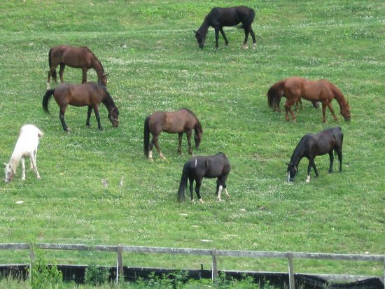 Clear Creek Guest Ranch: horses enjoying a day off