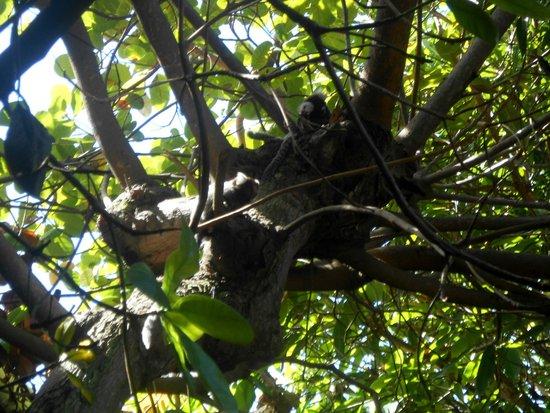 Aju Hostel e Pousada: Na área de convivência, árvores e presença de saguis