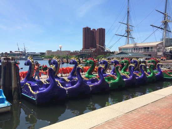 ‪Inner Harbor Paddle Boats‬