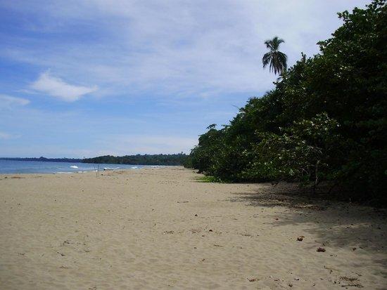 Cariblue Hotel: der Strand - Natur - ohne Bar - keine Liegestühle -