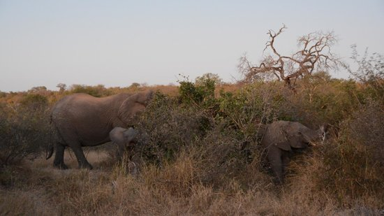 Naledi Bushcamp and Enkoveni Camp : elephants