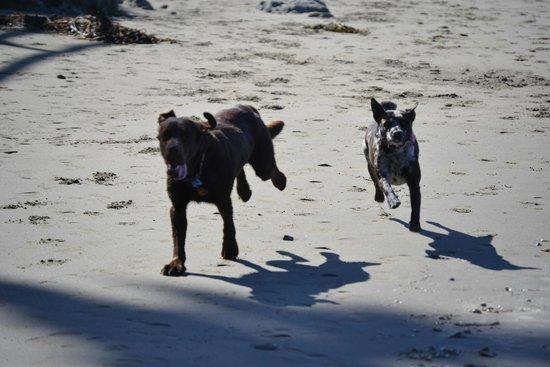 Cayucos Shoreline Inn...on the beach: Making Friends