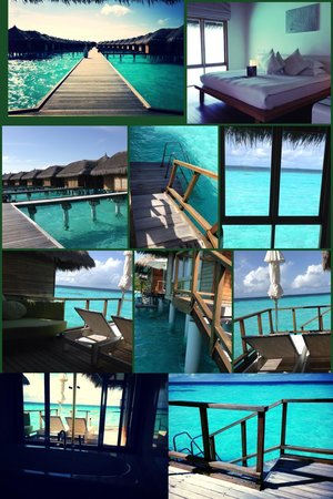 Maafushivaru : The room