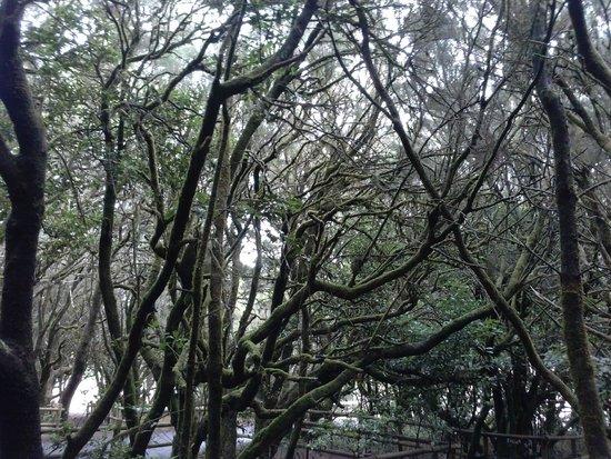 Garajonay National Park: zielono mi.....