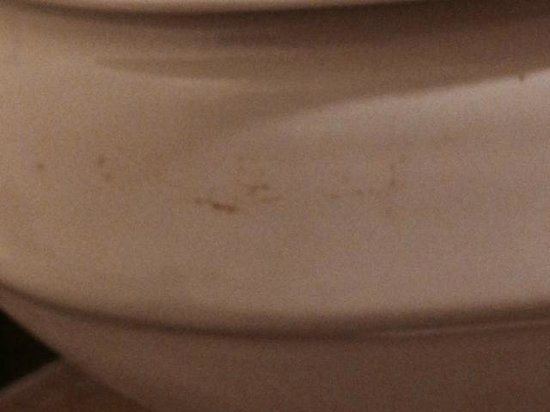 Loews Royal Pacific Resort at Universal Orlando: Feces on Toilet