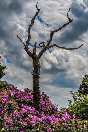 Hawkstone Park Follies: Hawkstone Park