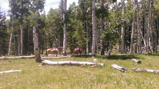 Hondoo Rivers and Trails: Aspen ride