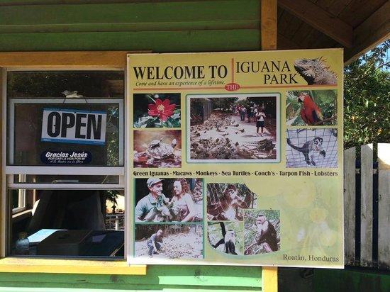 Roatan Christopher Tours: Iguana Park.