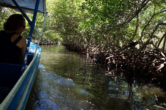 Roatan Christopher Tours: Mangrove Boat Tour was amazing!