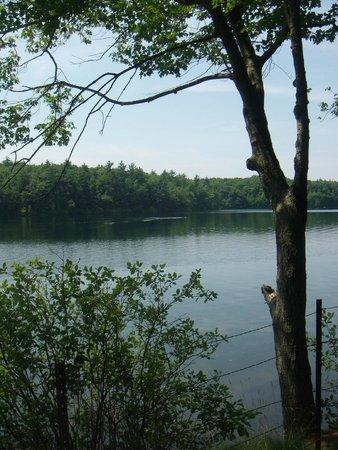 Walden Pond State Reservation: Walden's Pond