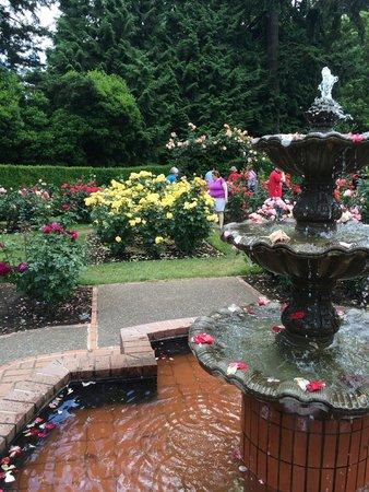 Rose Garden at Washington Park, Portland OR