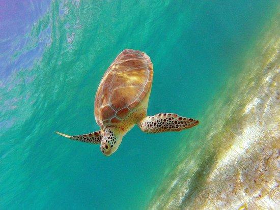 Turtle Snorkeling in Akumal