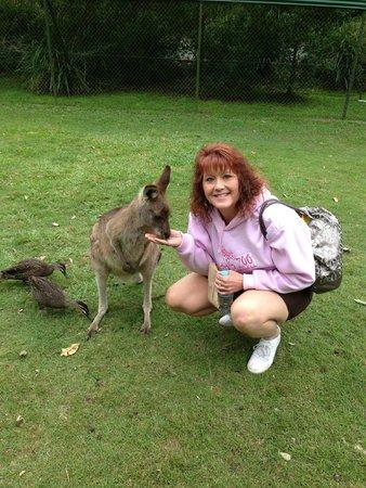 Australia Zoo : Feeding a kangaroo
