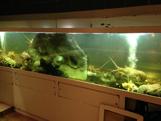 Ocean 82 : well stocked Lobster tank viewable from the street