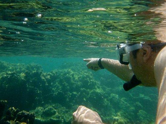 Tours in Rosario islands : Snorkelling nas Islas Rosario