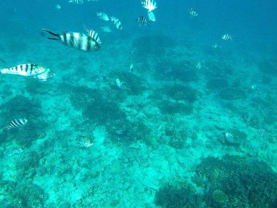 Baystone Boutique Hotel & Spa : Snorkeling