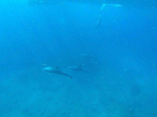 Baystone Boutique Hotel & Spa : Sortie snorkeling