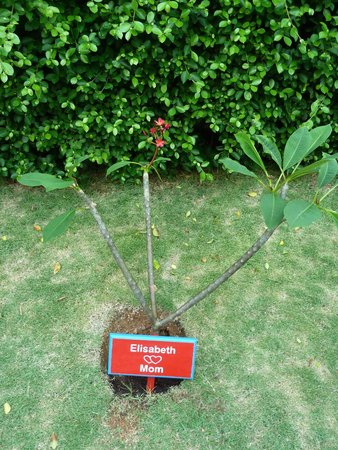 Mantra Samui Resort : Our tree got a sign !!