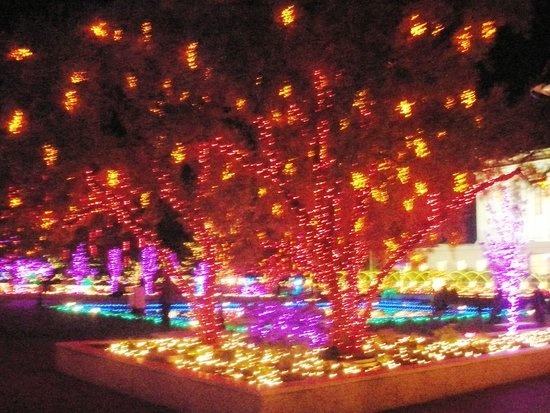 San Diego Christmas Lights.Tree Lights Picture Of San Diego Mormon Temple La Jolla