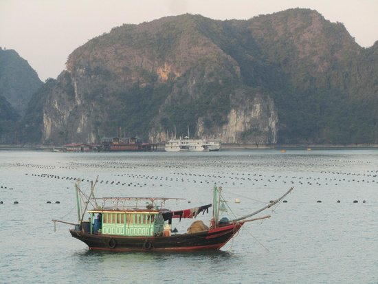 Buffalo Tours: Beautiful, peaceful Halong Bay
