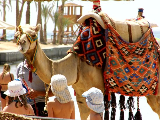 SENTIDO Palm Royale : tried to swap my husband...but the camel was too valuable