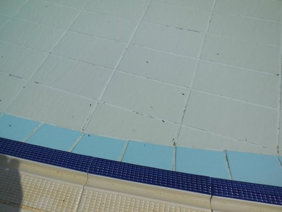 Vincci Nozha Beach Resort: Insects in the pool