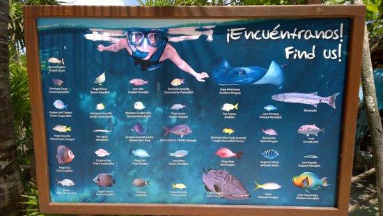 Parc Xel-Ha : Snorkeling