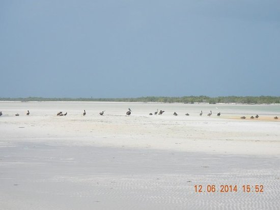 Villas HM Paraiso del Mar : Pelicans on the sand bar
