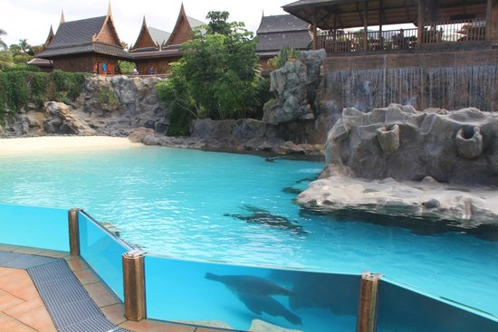 Siam Park: These guys were just inside the entrance