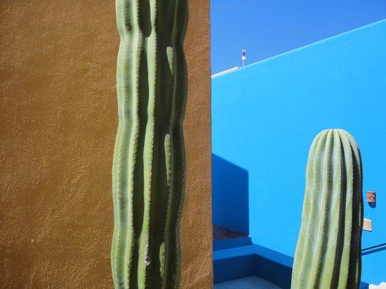 Club Regina Los Cabos: contraste con el desierto.