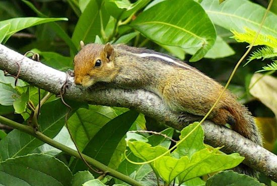 Fort House: petit ecureuil dans les jardins de l'hotel