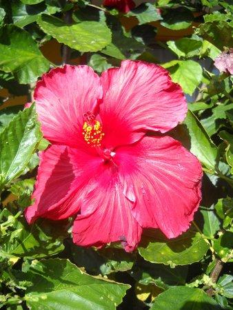 Cabanas Rapa Nui Orito : Flor del jardín Rapa Nui Orito