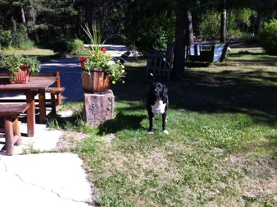 Kicking Horse Canyon B&B : Jeannie's very friendly dog