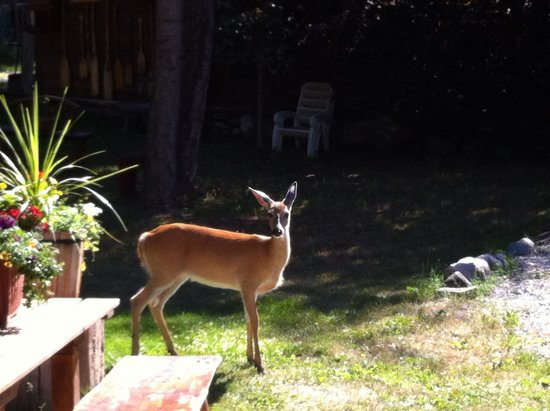 Kicking Horse Canyon B&B : A visitor came to watch us putting our bags in the car