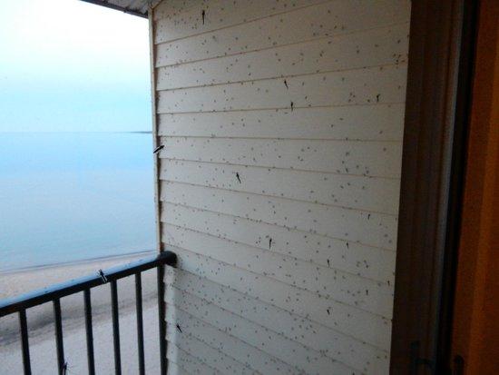 BEST WESTERN PLUS Dockside Waterfront Inn: Balcony view of flies