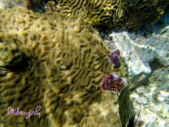 Coki Beach snorkeling