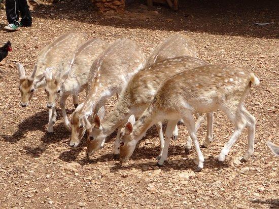 Askos Stone Park : Deer
