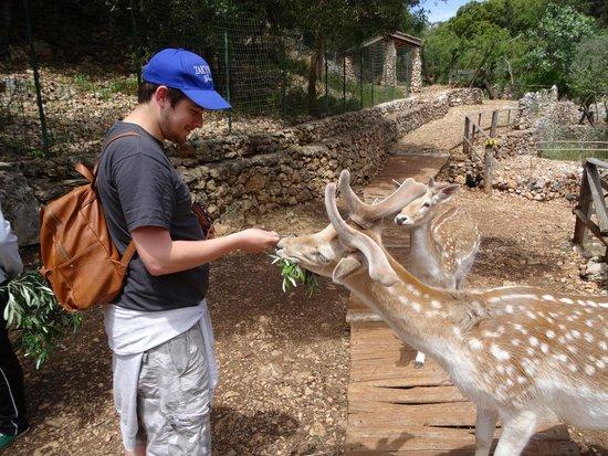 Askos Stone Park: Deer