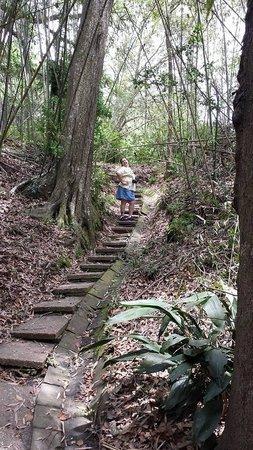 Jungle Gardens: me going up steps