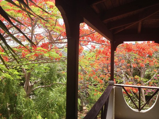 Surfsong Villa Resort: balcony surrounded by flowering trees