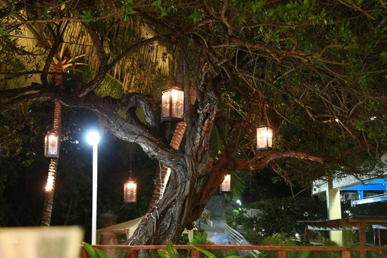 Pacifica Resort Ixtapa: lantern tree at night