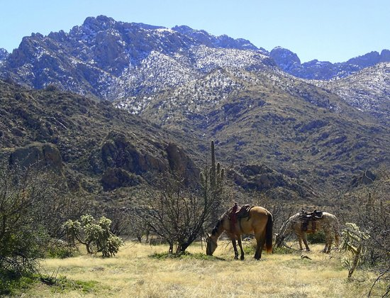 Catalina State Park: Winter Day - Recent Snow